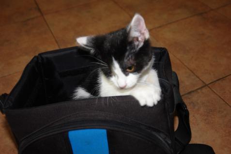 funny-kitten-3